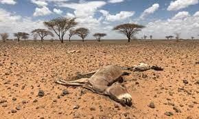 Madagascar strvation and drought 2021